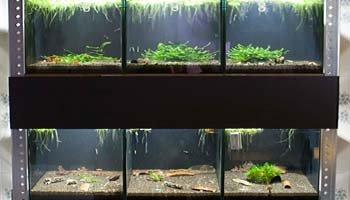 Regał krewetekowy - Hodowla krewetek ShrimpStar
