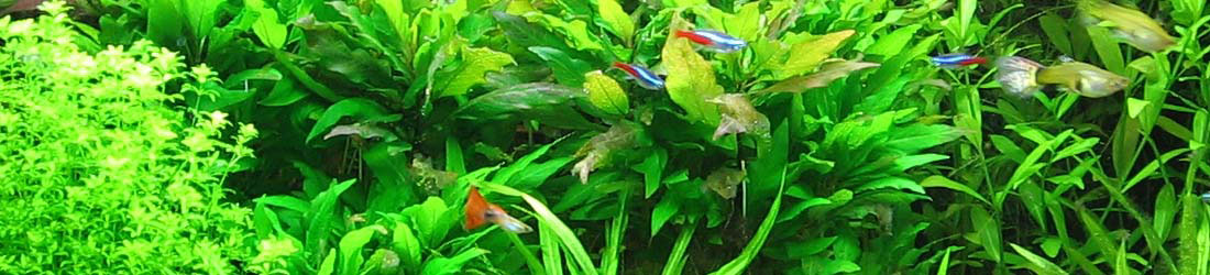 Zdjęcie historyczne - hodowla krewetek ShrimpStar