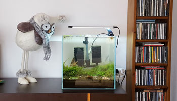 Jak założyć akwarium dla krewetek - hodowla krewetek ShrimpStar
