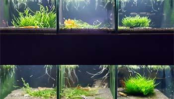 Regał dla krewetek - hodowla krewetek ShrimpStar